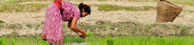 FEATURE: Scaling-up climate smart agriculture in Nepal